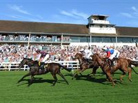2 for 1 Winning Raceday Package - Special Offer Experience Day