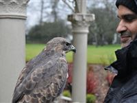 3 Hour Birds of Prey Day - Special Offer Experience Day