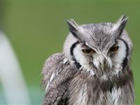 Birds of Prey Experience in the West Midlands