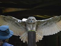 Entry to the Scottish Owl Centre for Two Adults - Kids Go Free Experience Day