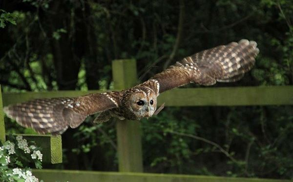 2 for 1 Woodland Walk and Owl Flying Experience at Lee Valley Park Dreamdays Experience 2