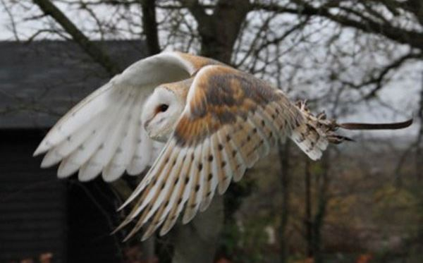 2 for 1 Woodland Walk and Owl Flying Experience at Lee Valley Park Dreamdays Experience 3