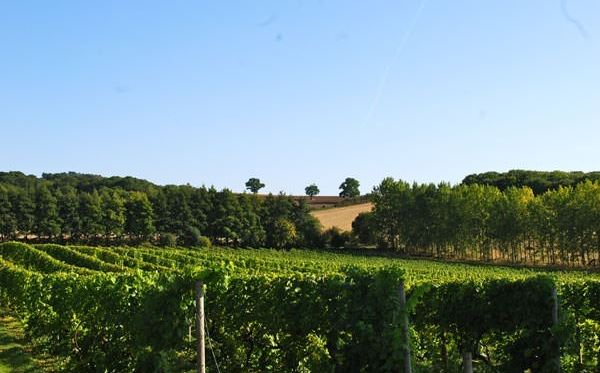 Chilford Hall Vineyard Tour and Tasting with Afternoon Tea for Two Dreamdays Experience 2