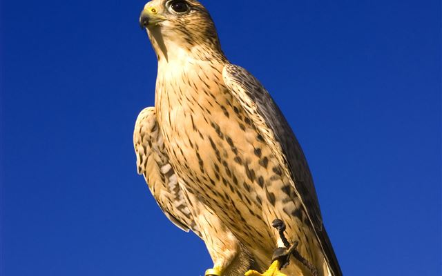 Half Day Introduction to Falconry Dreamdays Experience 1