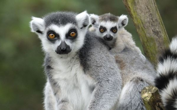 Meet The Animals at Bristol Zoo including Entry for Two and Free Drink Dreamdays Experience 3