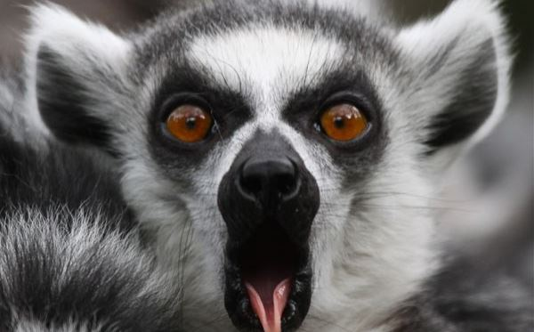 Meet the Lemurs Experience at Paradise Wildlife Park Dreamdays Experience 2