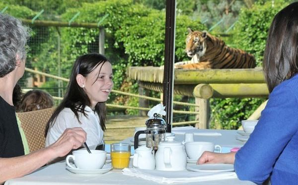 Tea with the Tigers  for Two at Paradise Wildlife Park Dreamdays Experience 2