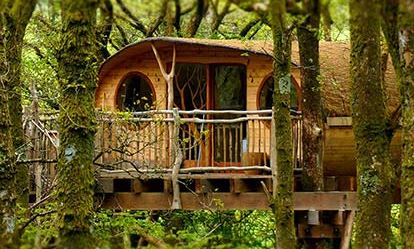 Two Night Tree House Escape for Two Dreamdays Experience 1