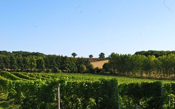 Vineyard Tour and Tasting with Lunch or Afternoon Tea for Two Special Offer Dreamdays Experience 1