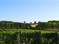 Chilford Hall Vineyard Tour and Tasting with Lunch for Two in Cambridgeshire Experience Day